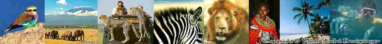 bandeau safari tanzanie