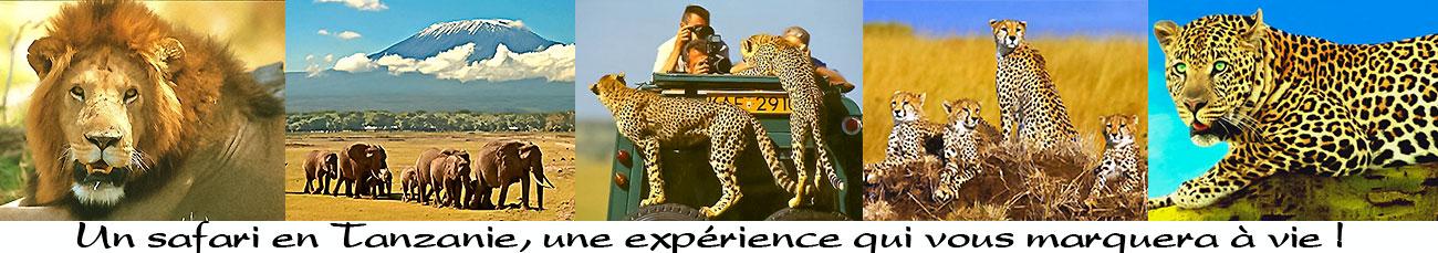 bandeau safari éco-solidaire en tanzanie
