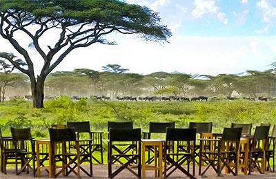 safari en tanzanie, vue de la grande migration depuis le lodge