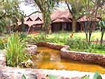 lodge safari en tanzanie
