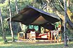 tented camp safari en tanzanie
