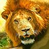 lion safari en tanzanie