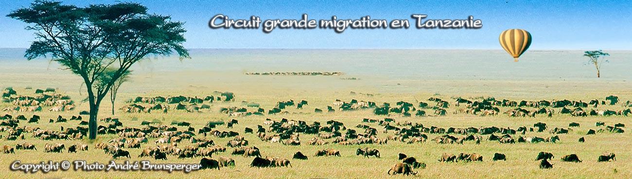 Photo de la grande migration des Gnous et des Zèbres dans le Serengeti. Safari mixte grande migration plus Zanzibar
