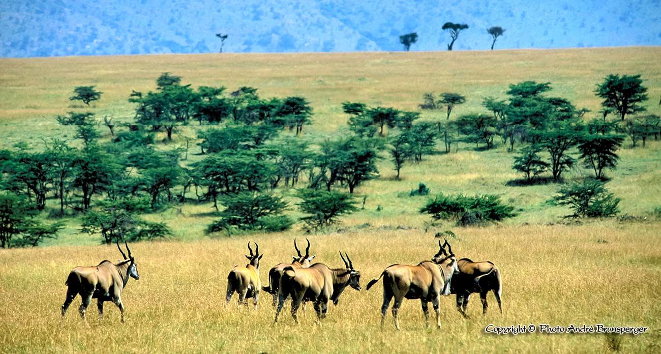 Elans serengeti Tanzanie