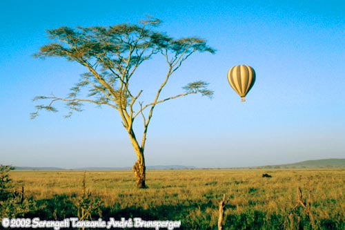 Safari mixte grande migration plus Zanzibar