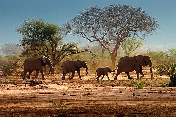 Eléphants safari éco-solidaire Tarangire