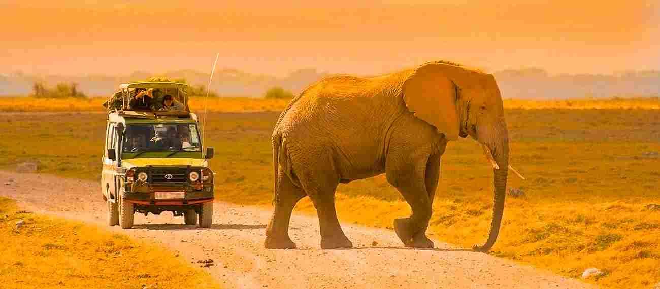 Safaris en Tanzanie en groupe ou en privé ?